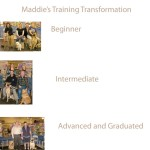 Maddie&#039;s Training Transformation under trainer, April O.